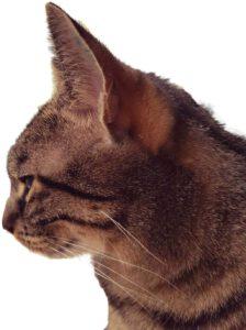 das ist meine katze daisy